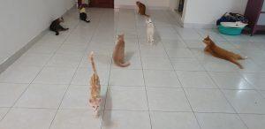 khách sạn chó mèo tphcm