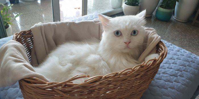 Dịch Vụ Giữ Chó Mèo Quận Gò Vấp Uy Tín