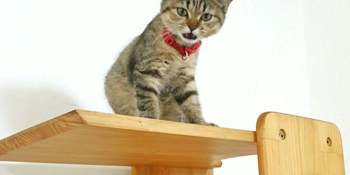 Trông Giữ Chó Mèo Quận 7 Không Nhốt Chuồng