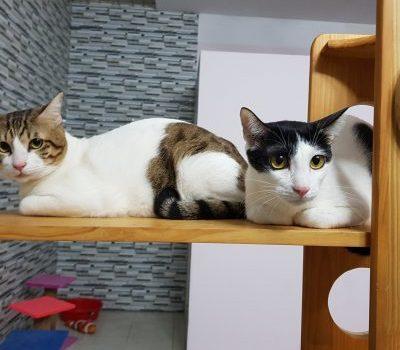 Khách Sạn Chó Mèo KHÔNG NHỐT CHUỒNG Tại TPHCM